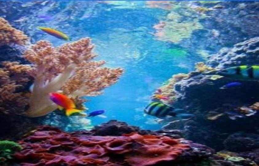 Terumbu Karang, Mutiara dalam Samudera yang Mulai Dirusak